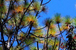 Audubon at Home: Native Tree Identification