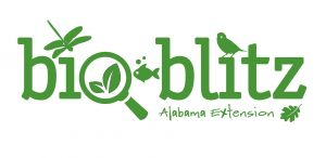 Bioblitz at Red Mountain Park