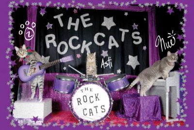 The Amazing Acro-cats Bounce into Birmingham!