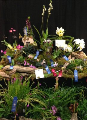 The Alabama Orchid Society 31st annual Orchid Show and Sale