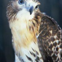 Exploring Natural Alabama: Birds of Prey, Masters of the Skies