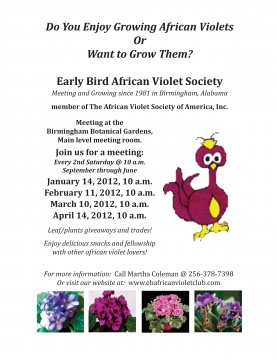 Early Bird African Violet Society